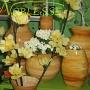 Floraria Noblesse Braila